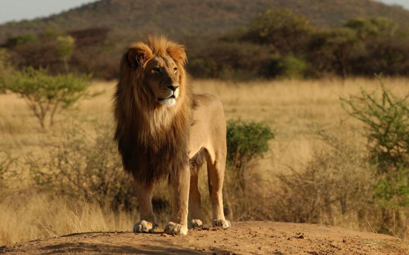 Kruger Safari Lodges