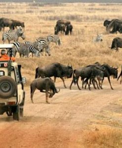 Tanzania Safari Package
