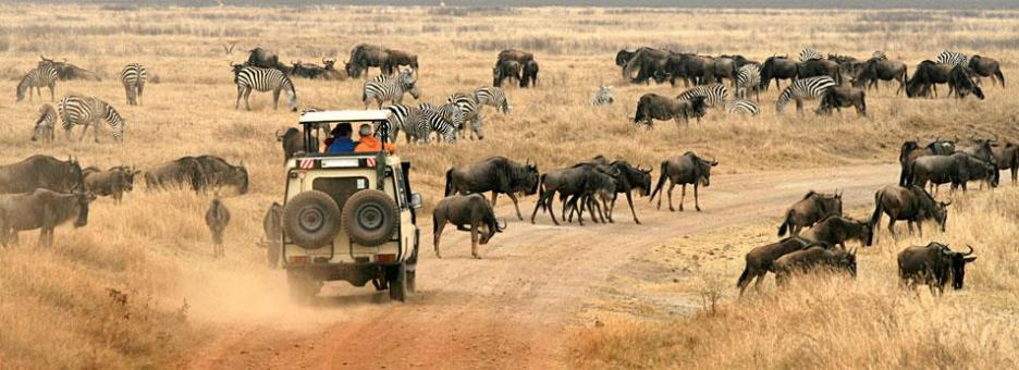 10 Days Kenya Safari and Rwanda Gorillas - African Travel Hub