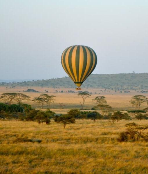 serengeti-main