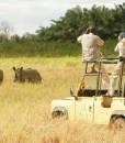 Elsas-kopje-safari