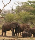 Faru Faru Lodge Elephants