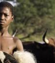 Isibindi Cattleboy