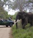 Kapama-karula-safari