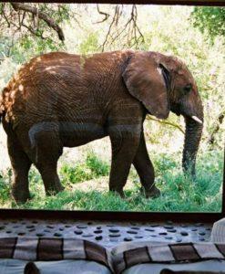 Makanyane-Elephant-outside-suite