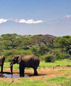 Ol Donyo Wuas - Elephants
