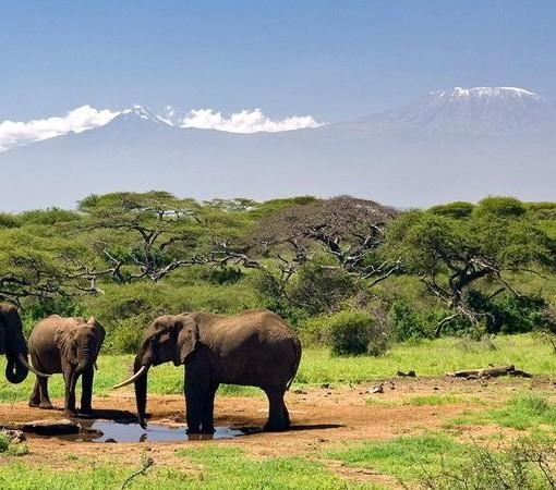 Ol Donyo Wuas – Elephants