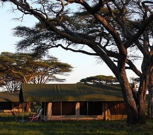 Serengeti-Migration-Classictentsmillenium