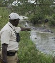 Serengeti-Migration-hippos