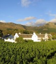 Steenberg Hotel _ Vineyards