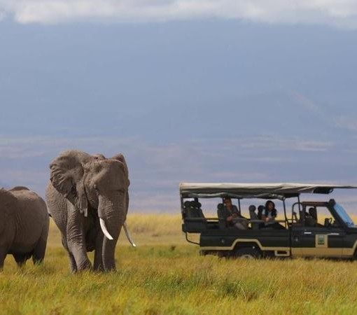 Tortilis Camp - Game Drive - Elephants