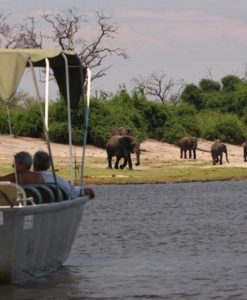 elephant-valley-lodge-elephant-cruise
