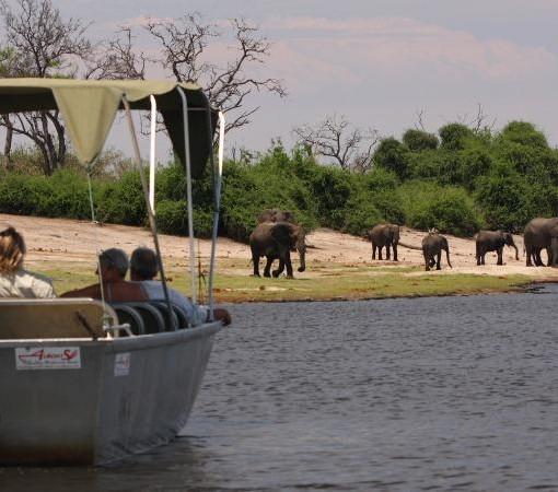 elephant-valley-lodge-elephant-cruise