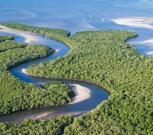 ibo-island-mangroves