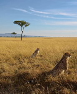 Masai Mara Safari Lodges