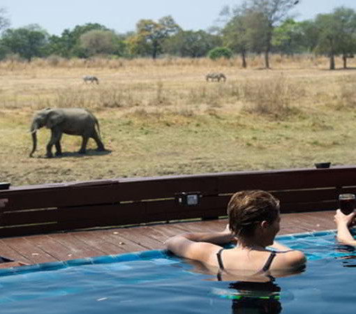 lion-camp-pool
