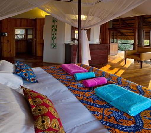 lion-camp-room2