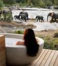 londolozi-granite-btah-and-elephants