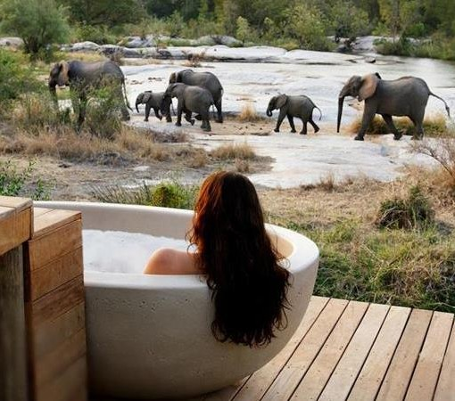 londolozi-granite-btah-and-elephants