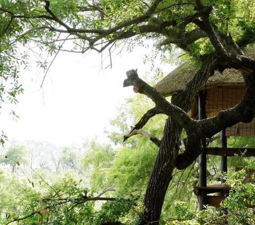 londolozi-tree-camp-sala