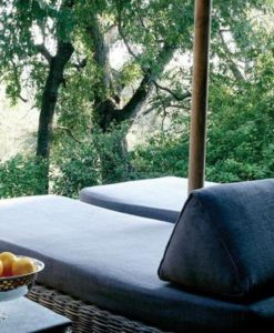 londolozi-tree-camp-tree3