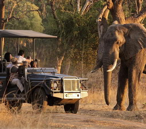 mfuwe-elephant