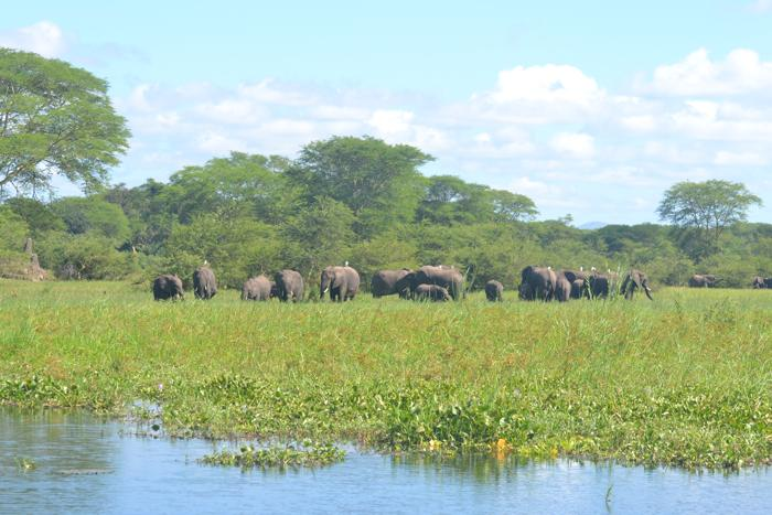 Liwonde-National-Park-Elephants-2