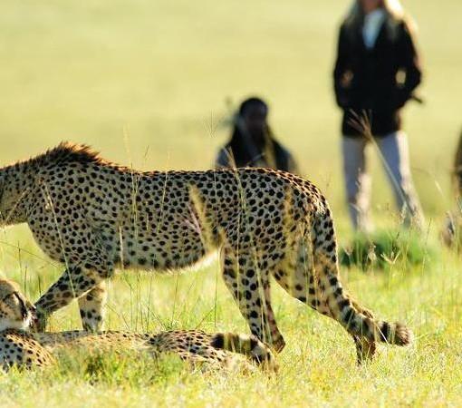 Sarili  Walking Safari