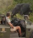 Tanda-Tula-Elephant