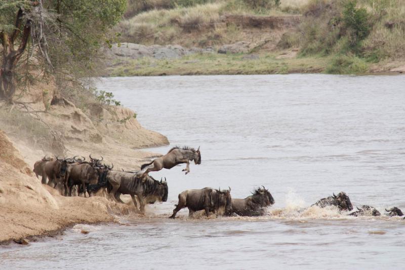 Kenya Safari Tours & Packages