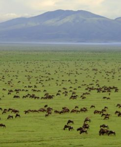 serengeti-packages-featured