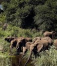 singita-lebombo-elephants