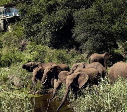 singita-lebombo-elephants