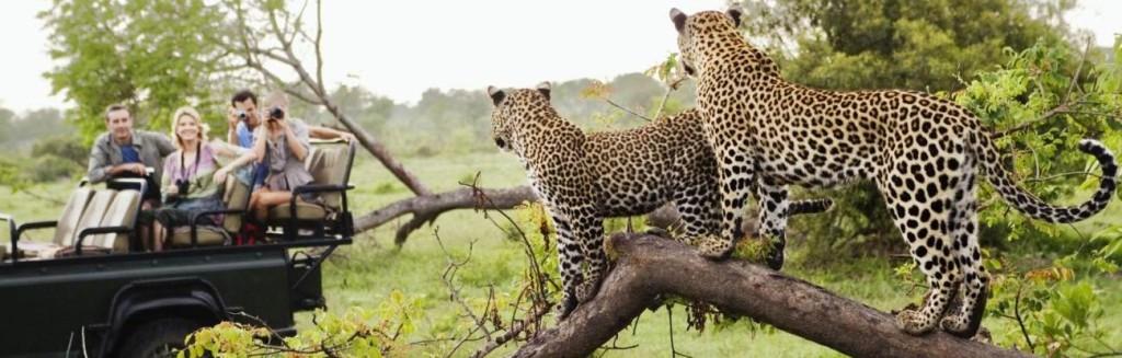 index-image-safari-shorter