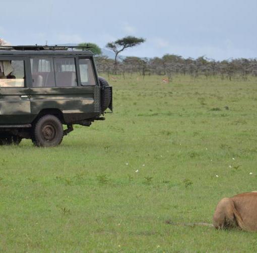Naboisho-Camp-game-drive-lion