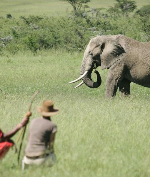 Naboisho-Camp-walking-safari-elephant-2