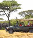 Naboisho-Conservancy-elephant-game-drive