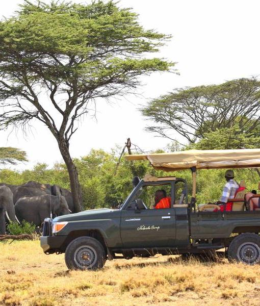 Naboisho-Conservancy-elephant-game-drive