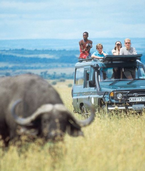 Rekero-Camp-game-drive-buffalo