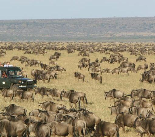 rekoro-Migration-arrives-Masai-Mara