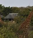 inyati-Lodge Giraffe
