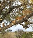 inyati-Tree pride
