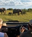 kichaka-game-drive-elephant