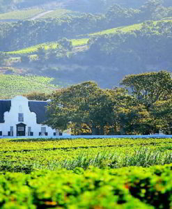 Cape Winelands Packages