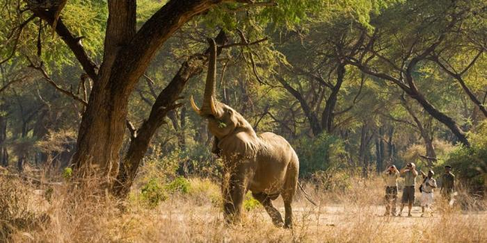 south-luangwa-elephant-zambia